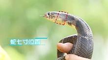 普通人<B>怎样</B><B>才能</B>抓住蛇<B>的</B>七寸?