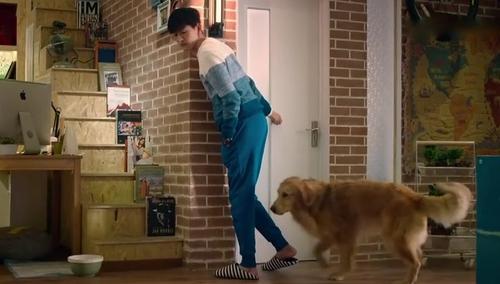 《女汉子真爱公式》片段:张翰狗盆撒尿遭狗咬